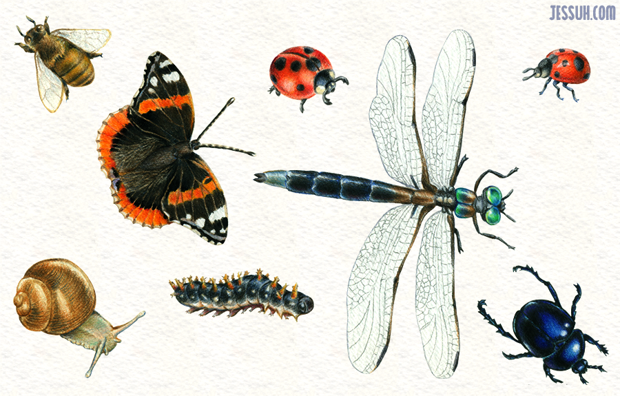 Watercolor and colored pencil drawing of lady bugs, a bee, dragonfly, beetle, snail, caterpillar and butterfly