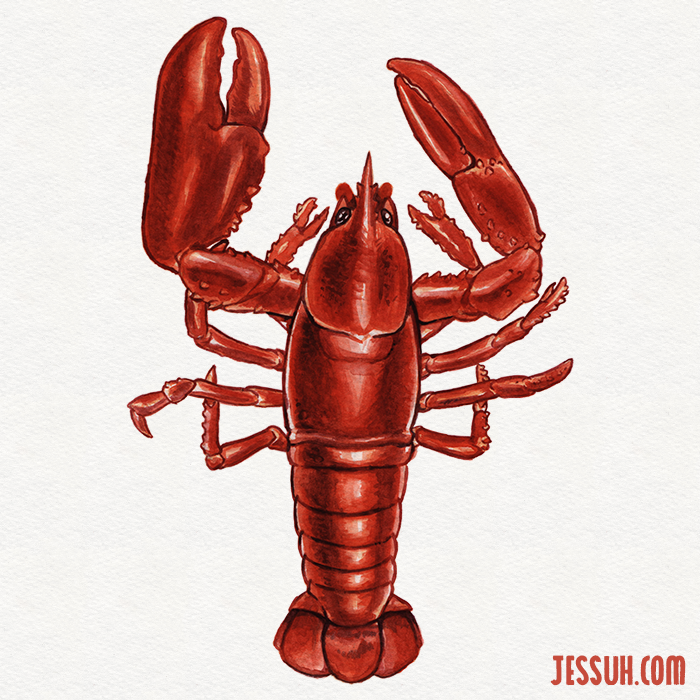 Watercolor painting of a bright red lobster
